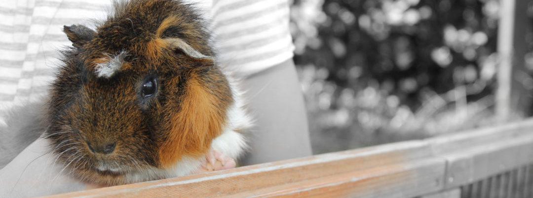 Tierpension für Kaninchen und Meerschweinchen