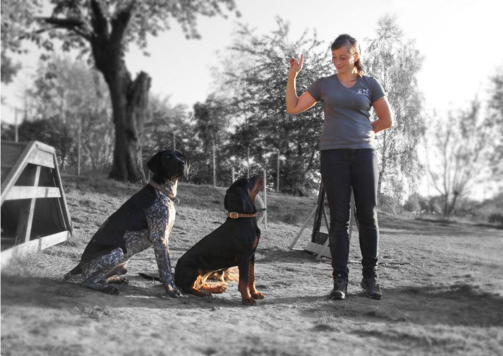 Zwei Hunde beim Einzeltraining