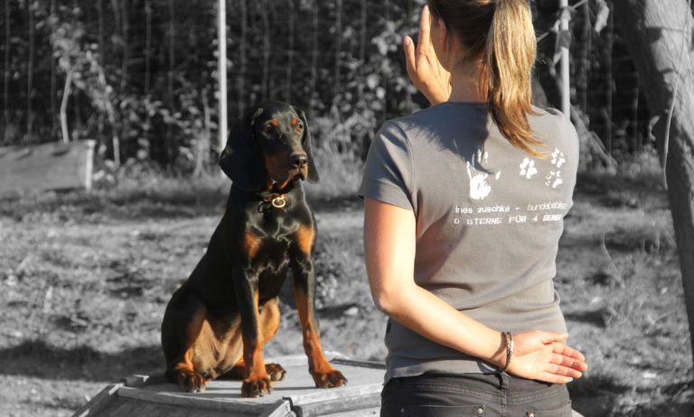 Welpe in der Hundeschule in Taubenheim bei Dresden