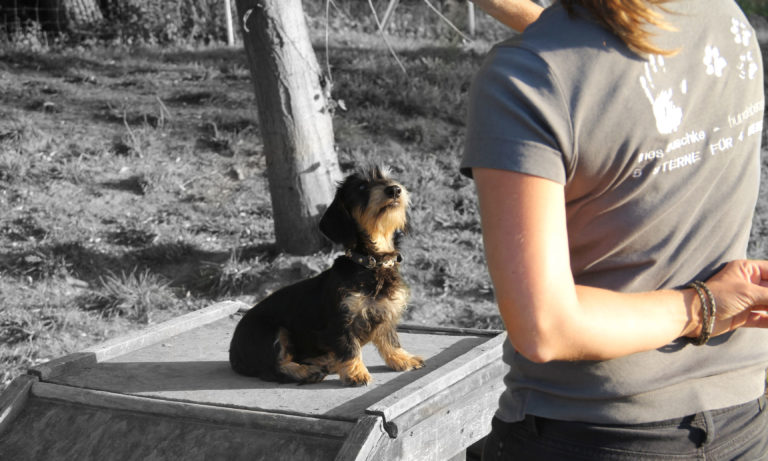 Hundetraining mit Welpen